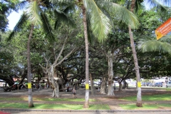 The largest Banyan Tree in the state of Hawaii covering a city block