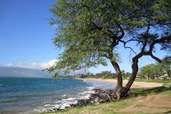 Kamaole I beach and park - 10-15 minute walk