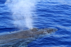 IMG_9039whale-close700